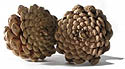 scent your own pine cones